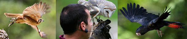 Healesville Sanctuary is located approx. 30 mins from the Yarra Valley Motel